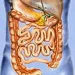 Влияние бани на пищеварительную систему человека