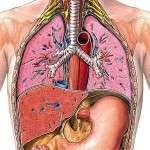 Трахеит — описание и симптомы болезни