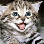«Болезнь кошачьей царапины»
