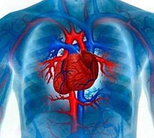 Заболевания сердечно-сосудистой cистемы у детей