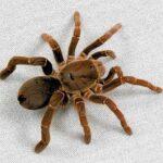 Укусы пауков