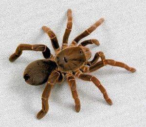 Паук фото (spider photo)