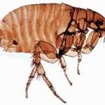 Что такое инфекционное заболевание