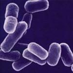 Лечение острых кишечных инфекций
