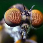 Глаз — описание органа