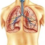 Лечение бронхита методами Одо из Мена