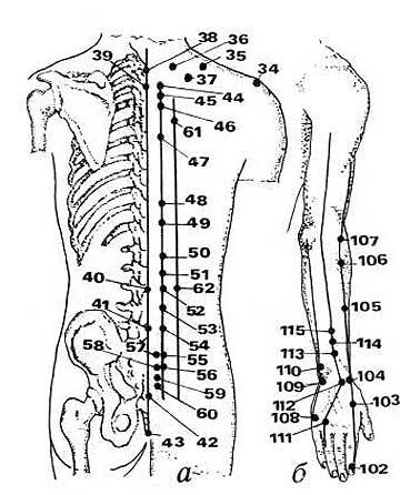 точек на теле человека