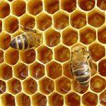 Мёд — описание, свойства, состав