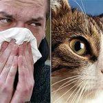 Аллергия — описание болезни