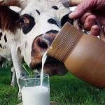 Молоко — описание, химический состав