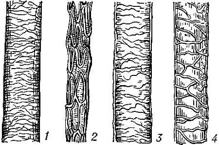 Схема кутикулы волоса