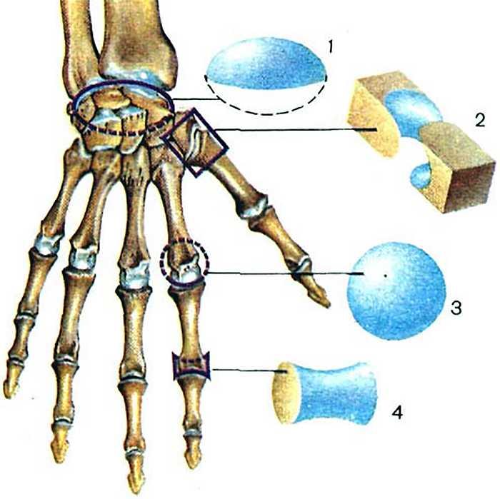 суставы кисти лечение народными средствами