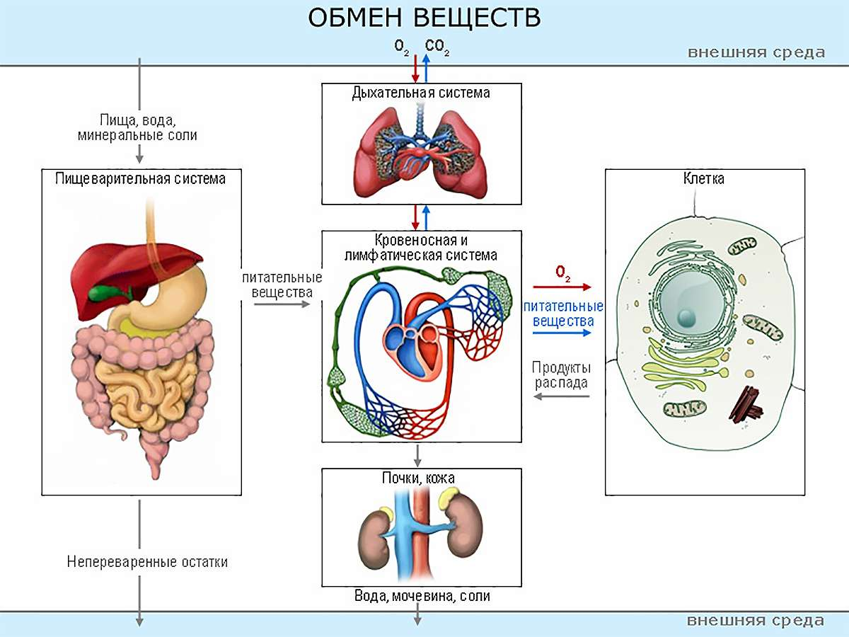 диетолог энгельс