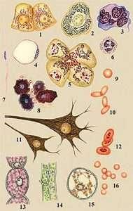 Животные и растительные клетки (Animals and plant cells)