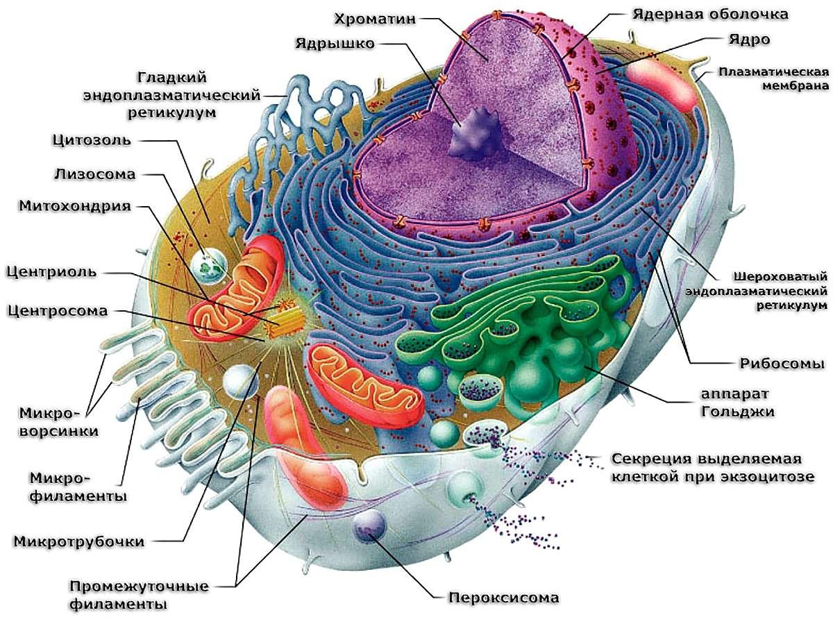 Картинки по запросу клетка