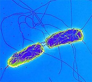 Брюшной тиф (typhoid fever)