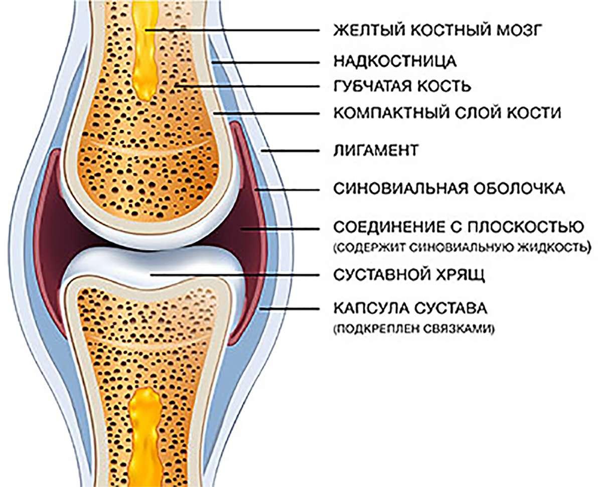 Сустав в норме (joint normal)