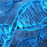 ДНК (Дезоксирибонуклеиновая кислота)